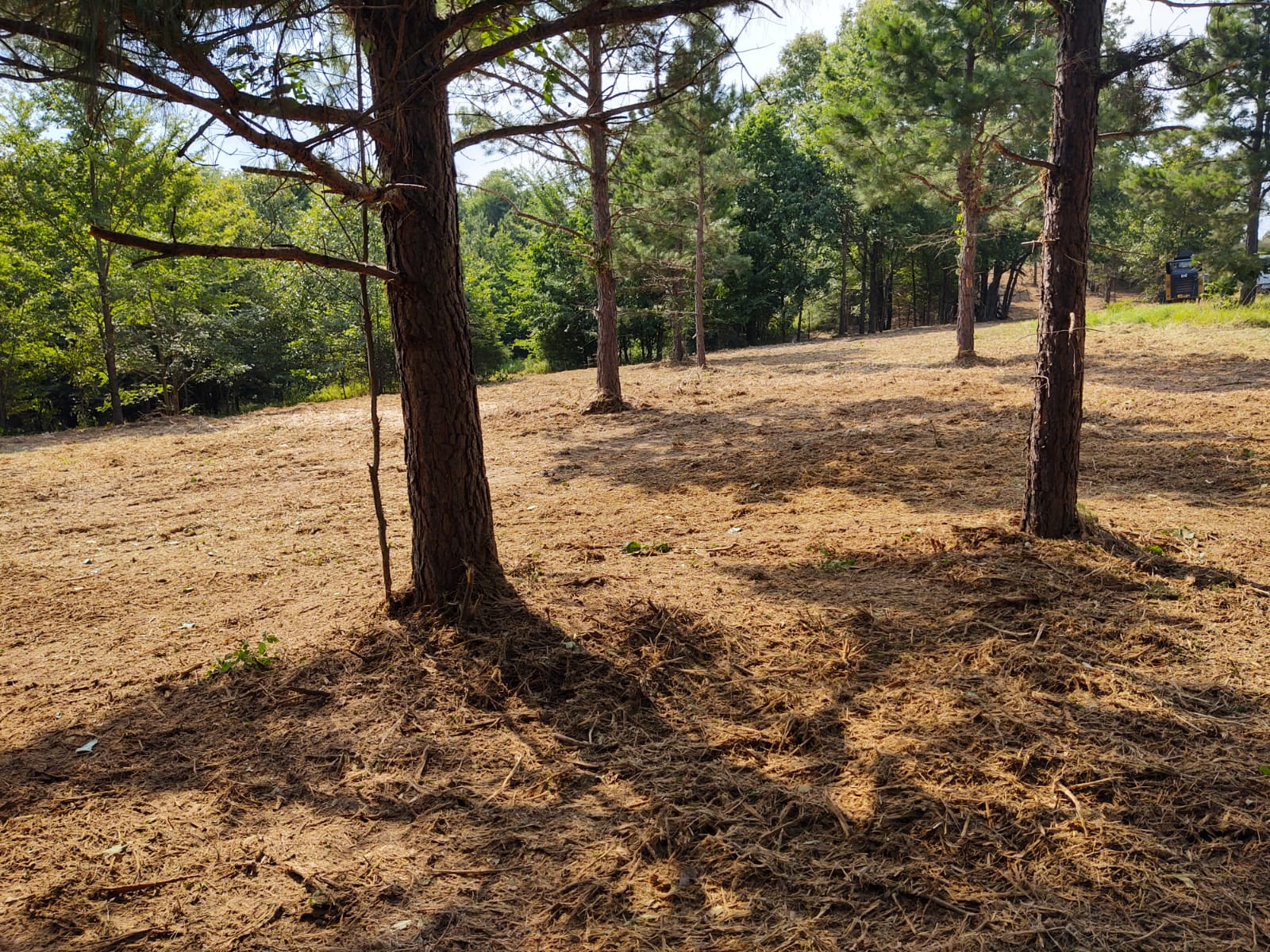 land cleared by forestry mulching